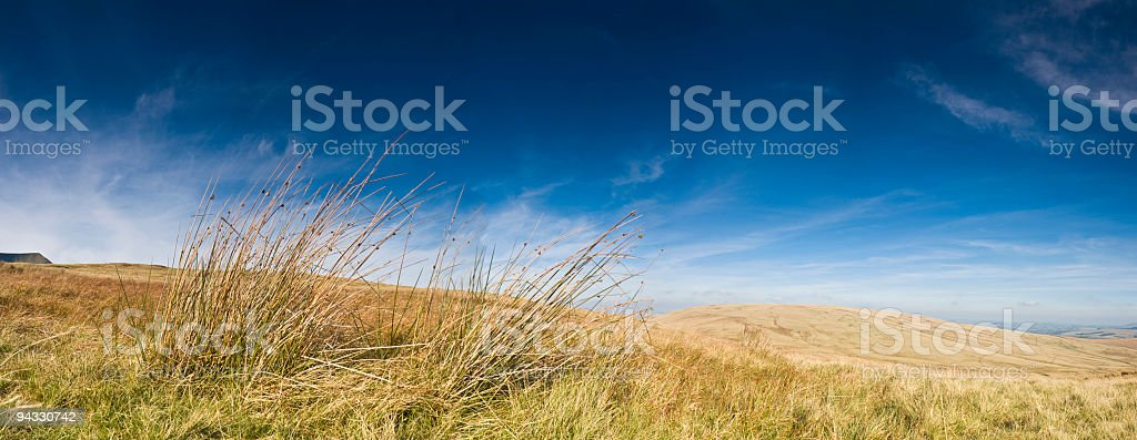 Wild and windswept grassland stock photo
