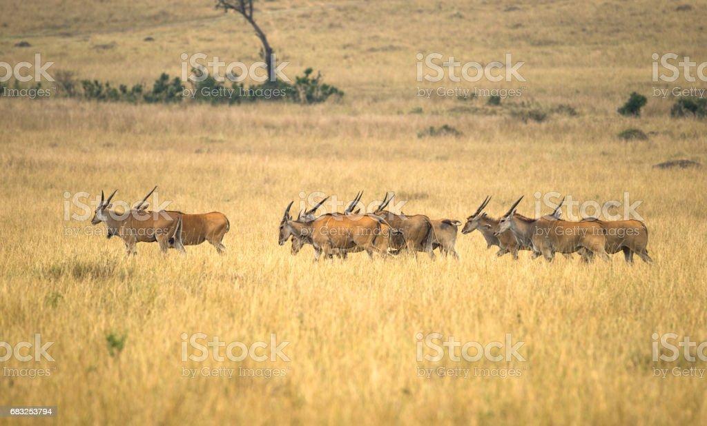 Wild animal in botswana stock photo
