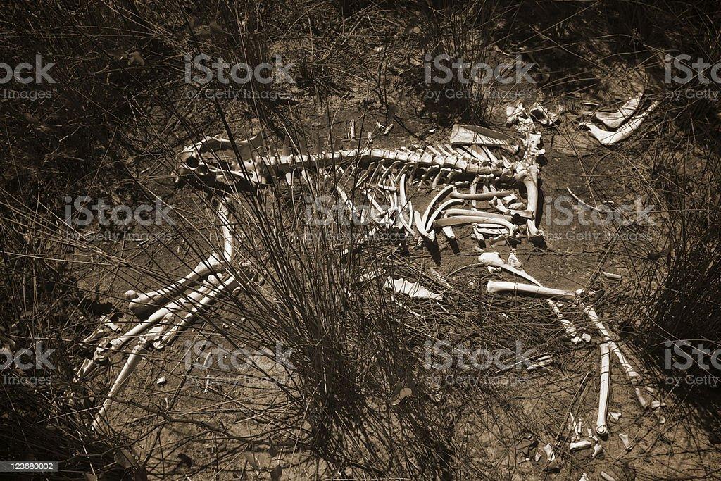 Wild animal skeleton. Lizenzfreies stock-foto