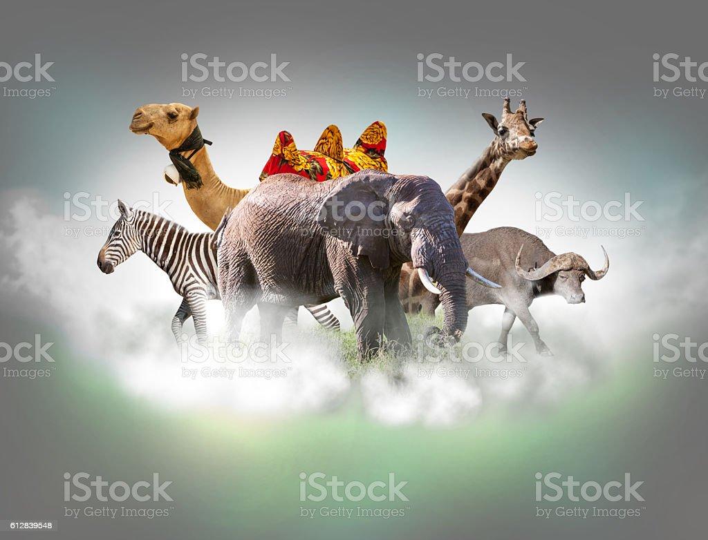 Wild animals group - giraffe, elephant, zebra above white clouds stock photo