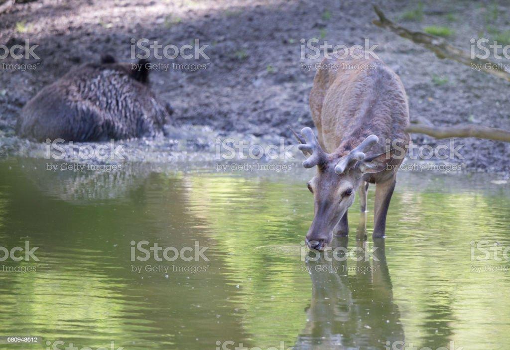 Wild animals in natural habitat stock photo