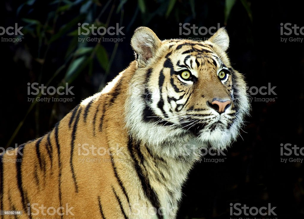 wild at heart stock photo
