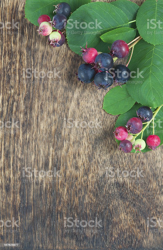 Wild autumn berry in front of dark wooden background royalty-free stock photo