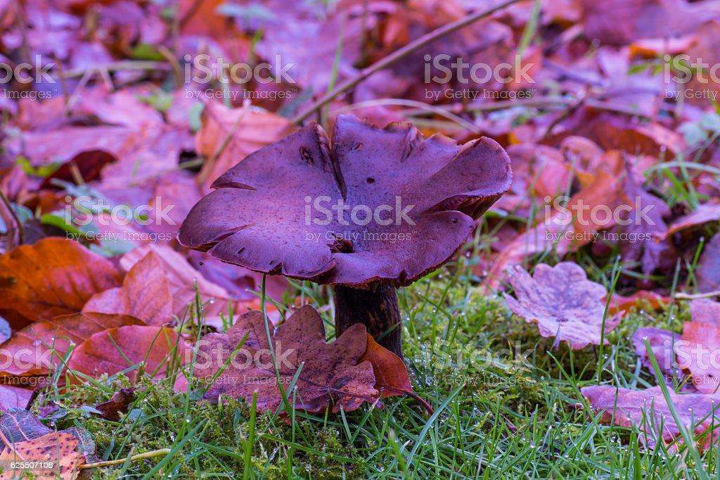 Wild Autumn Mushroom stock photo