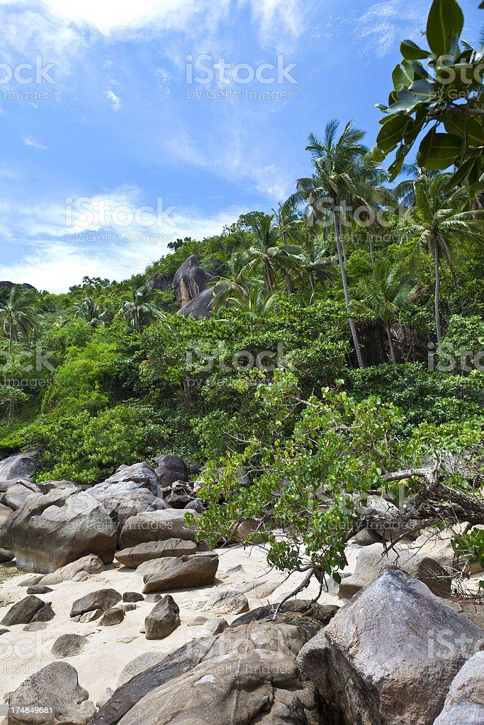 wild beach royalty-free stock photo