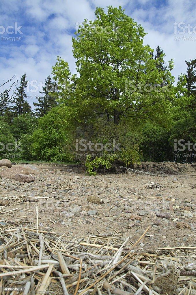 Praia selvagem foto de stock royalty-free