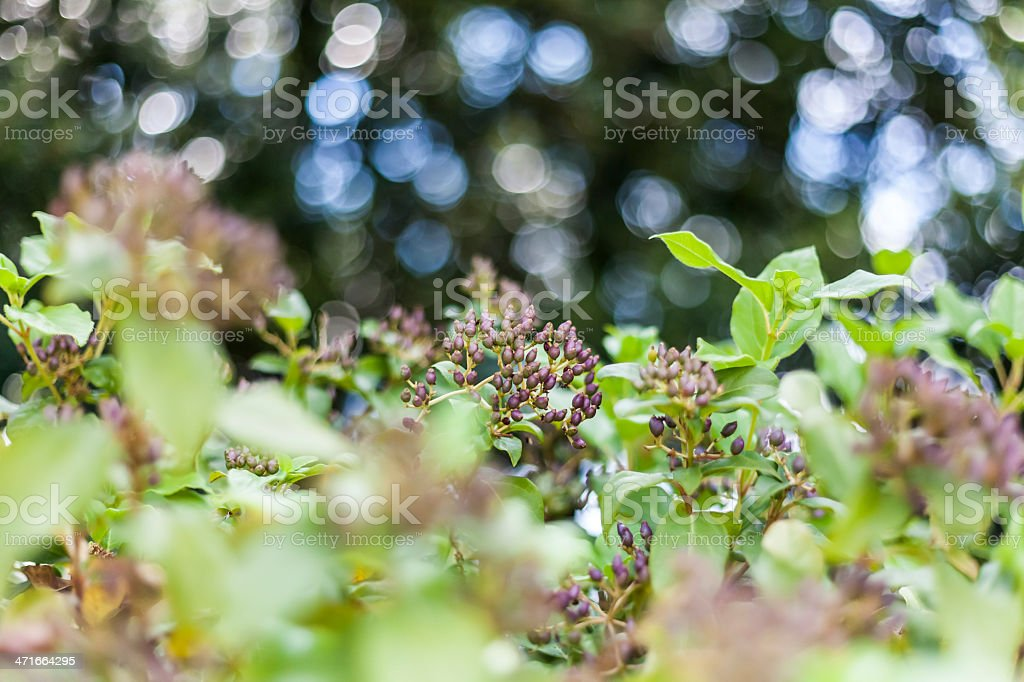 Wild beauty stock photo