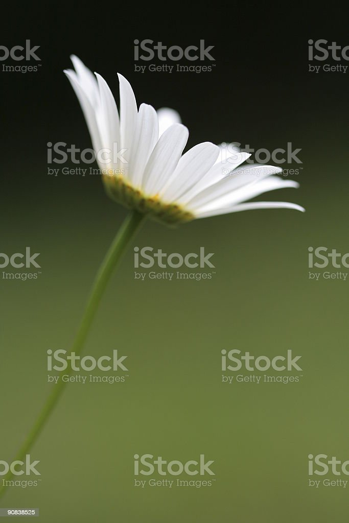 wild beauty stock photo