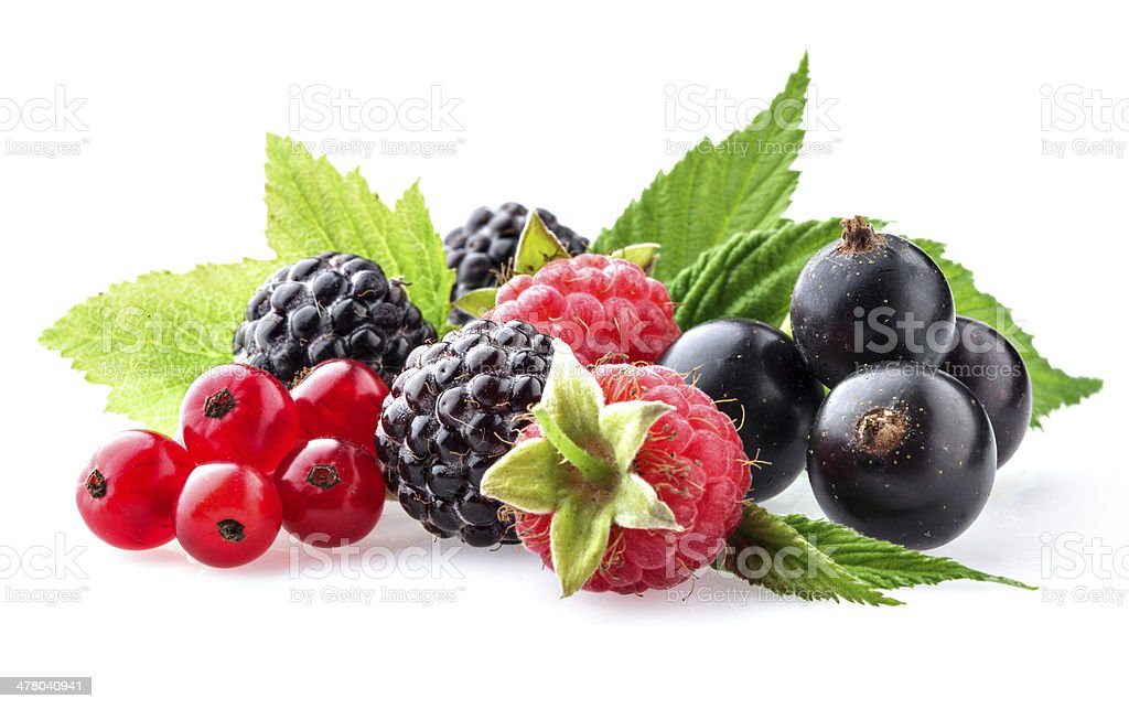 Wild berries on a white background stock photo