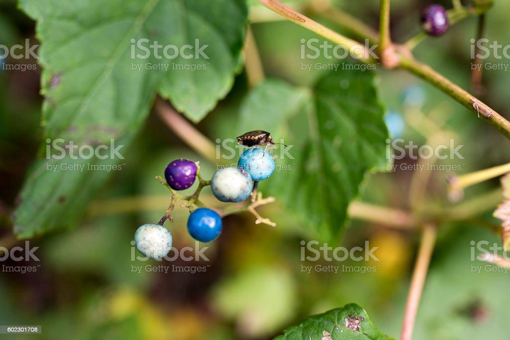 wild berry stock photo