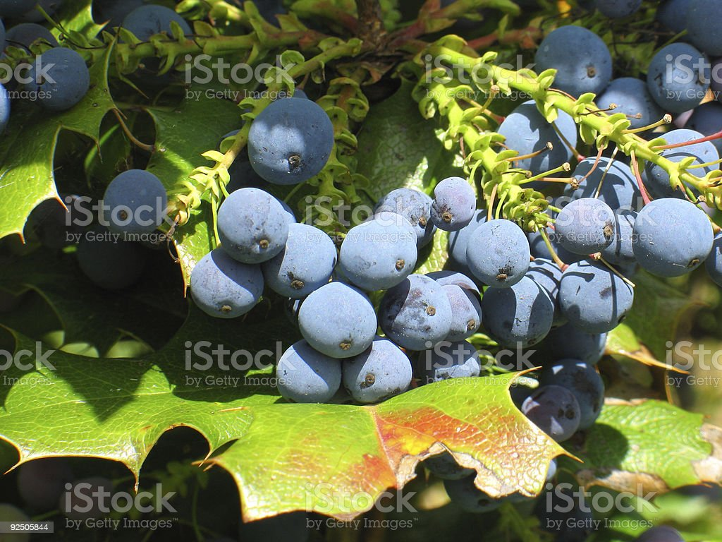 Wild berry stock photo