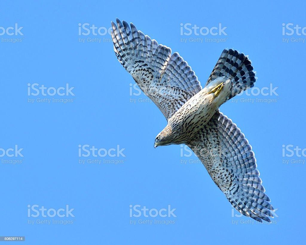 Wild bird in Hokkaido stock photo
