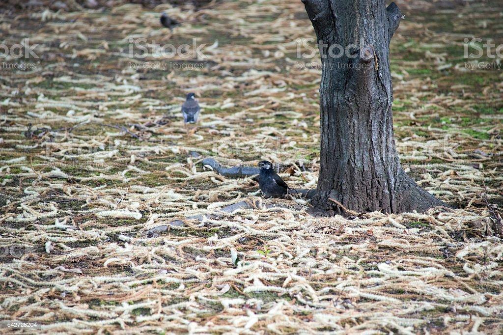 Oiseaux sauvages et la chute de feuilles de la texture photo libre de droits