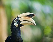 Wild birds in nature
