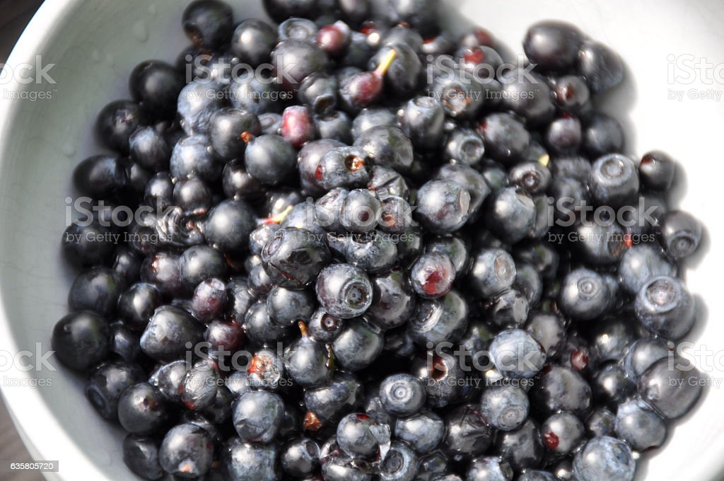 Wild blueberry from Sweden stock photo