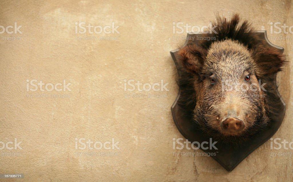Wild boar on a wall in Volterra, Tuscany Italy stock photo