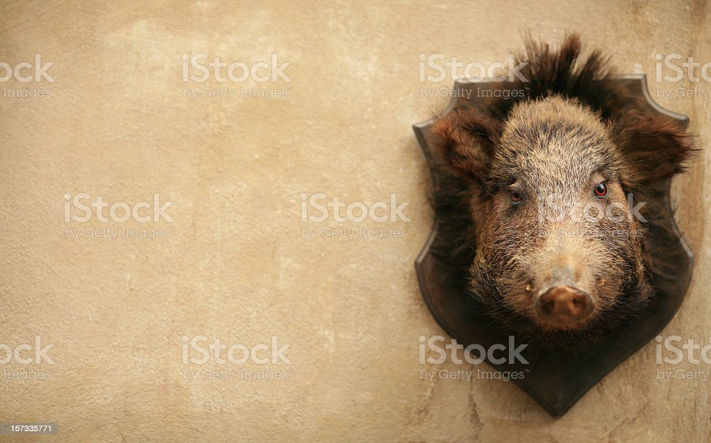 Wild boar on a wall in Volterra, Tuscany Italy stock photo