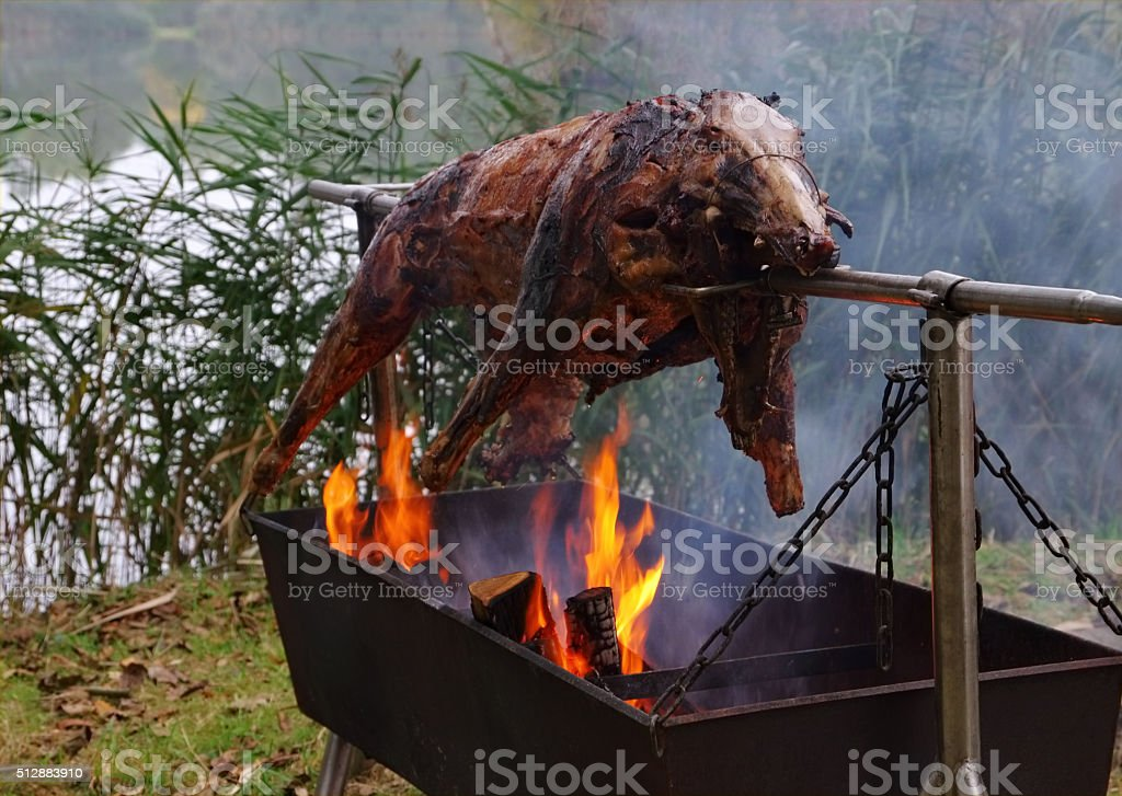 wild boar on spit stock photo