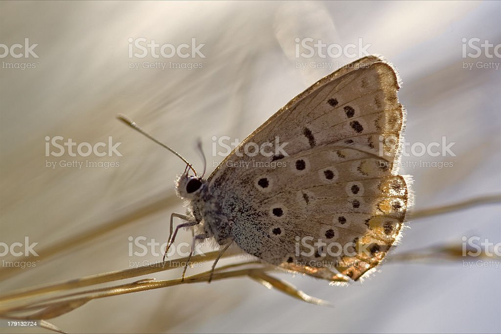 wild brown orange  butterfly  on a green leaf royalty-free stock photo