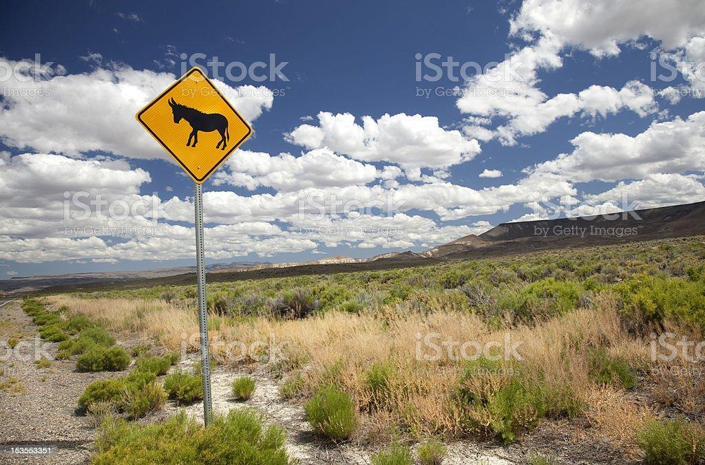 Wild Burro Crossing stock photo