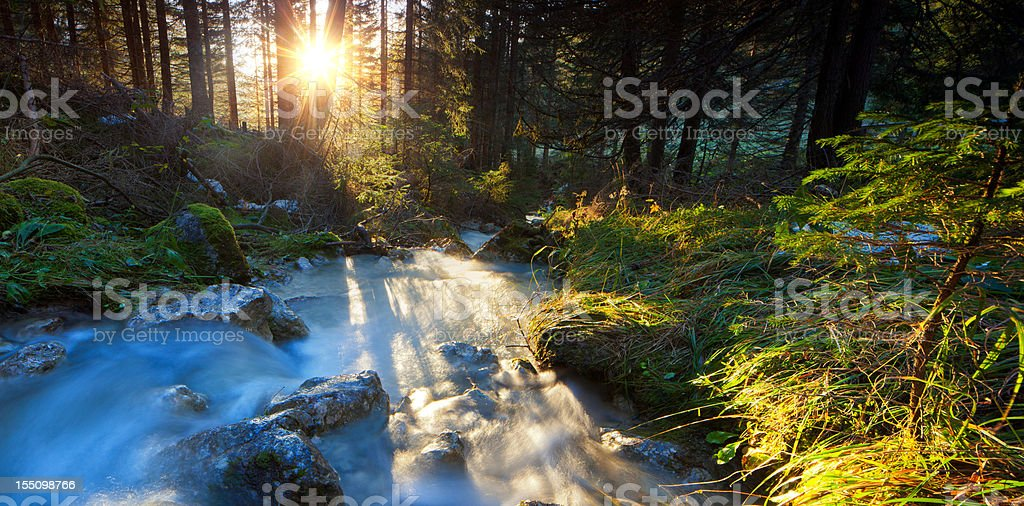 wild cascade with flowing water in a wood stock photo