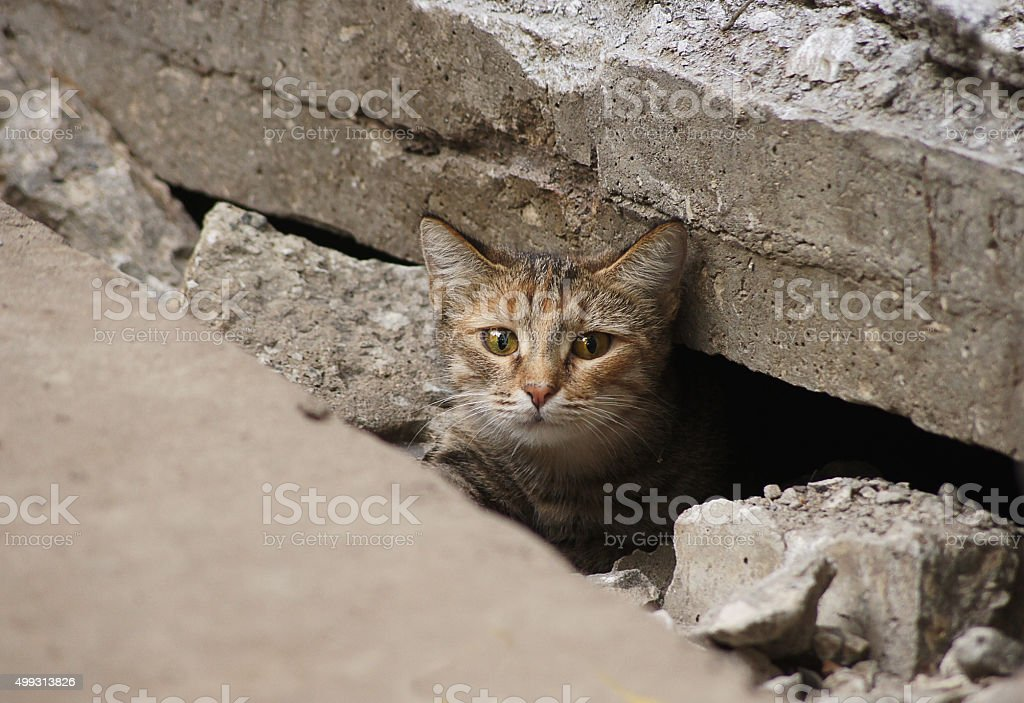 Wild cat hid under the tiles of the road stock photo