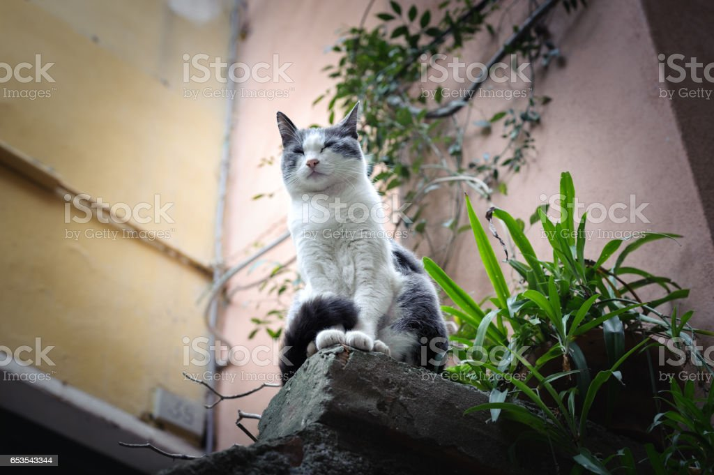 Wild cat is sitting like a lion on stone stock photo