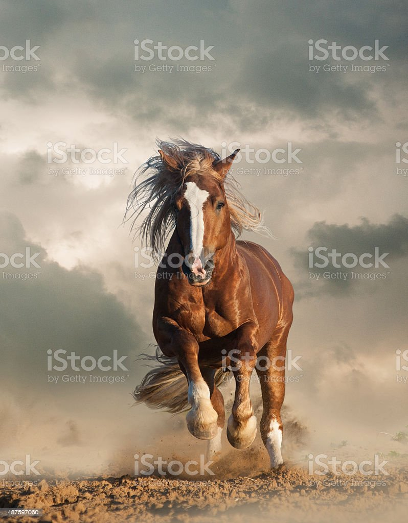 Wild Horse Running Fast Wild Horses Pictures, ...
