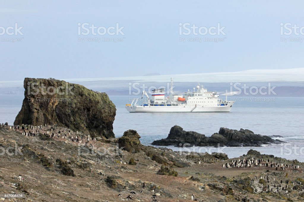 Wild chinstrap penguins and cruise ship in the background, Antarctica stock photo