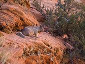 Wild Climbing Squirrel - USA