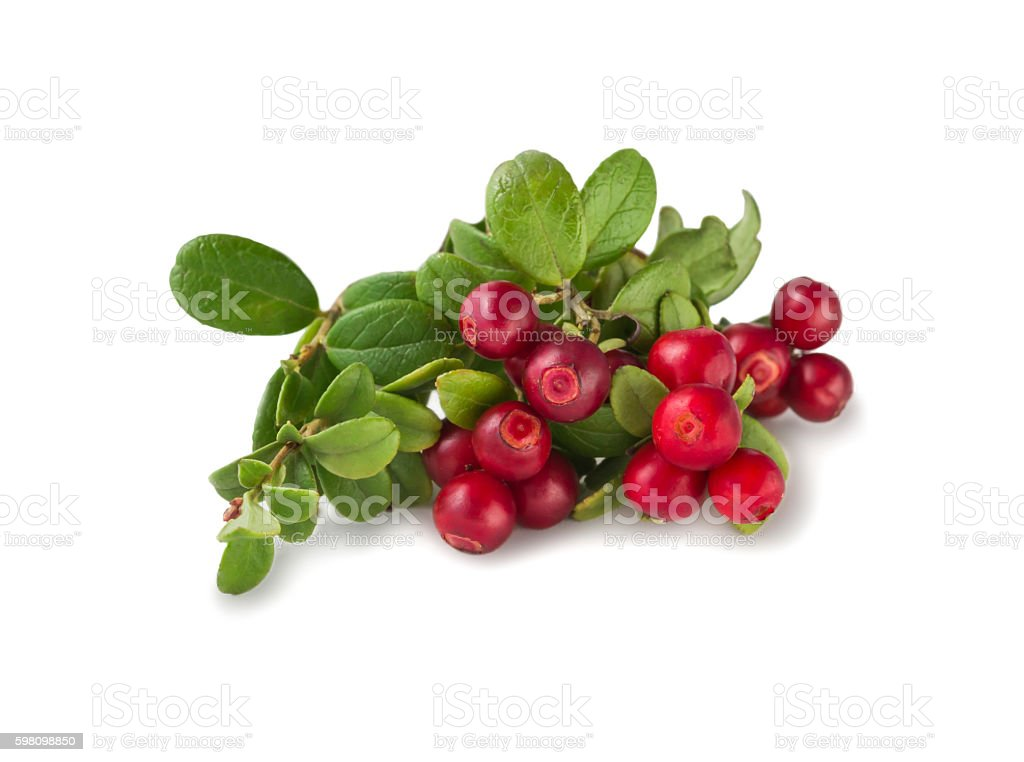 Wild Cowberry with leaves stock photo