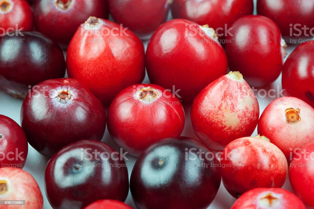 Wild cranberry color shape variation. Red ripe berries macro view stock photo