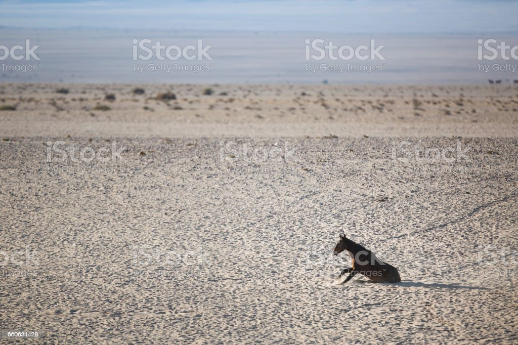 Wild desert horse in the south of Namibia stock photo