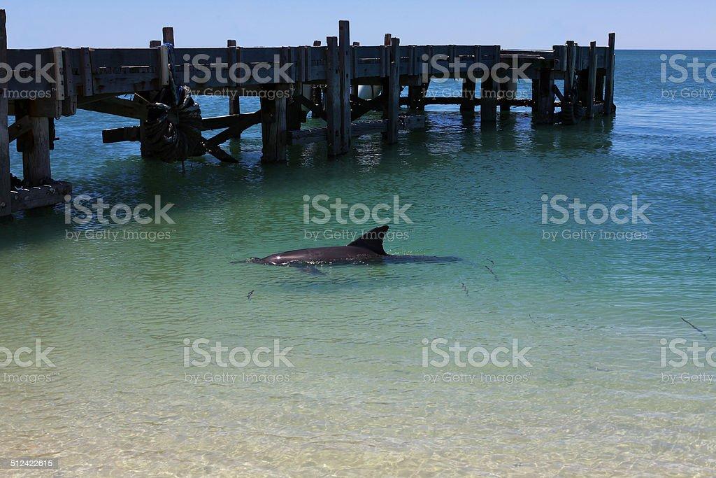 Wild Dolphin Up stock photo