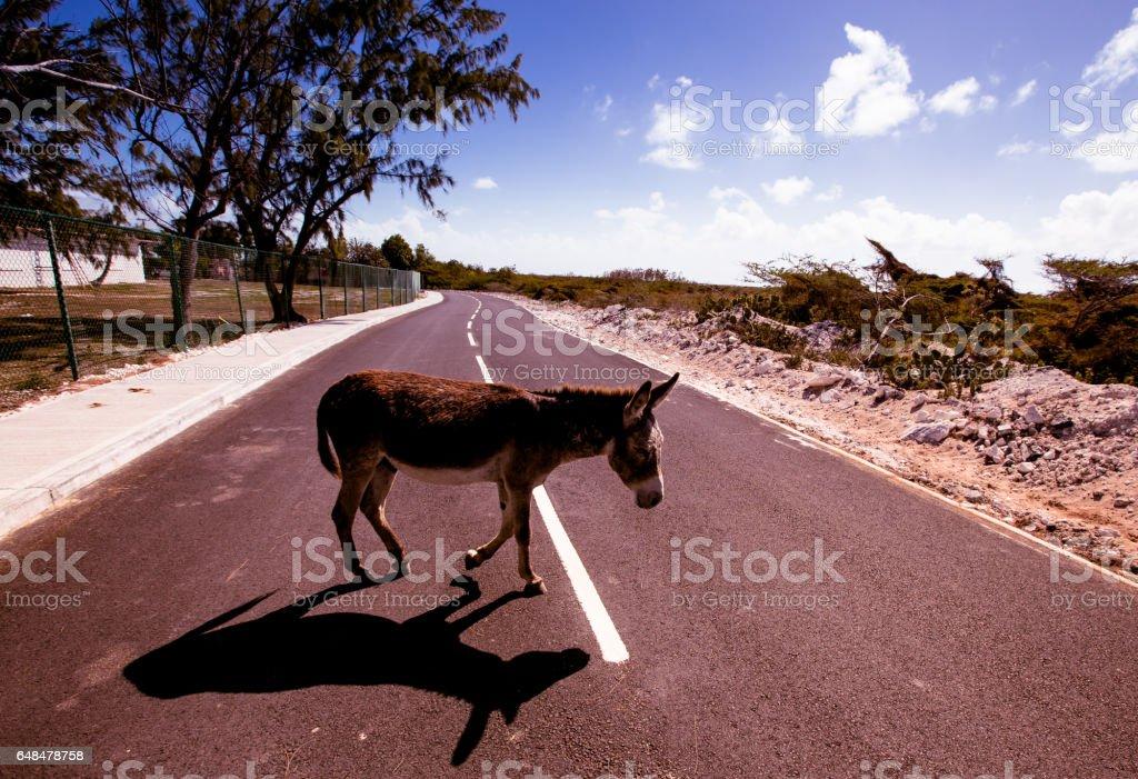 Wild donkey stock photo