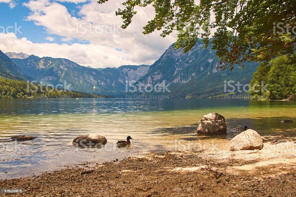Wild ducks at the mountain lake stock photo