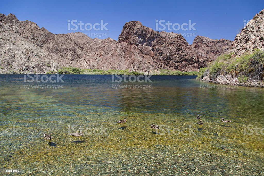 wild ducks swimming in crystal clear lake royalty-free stock photo