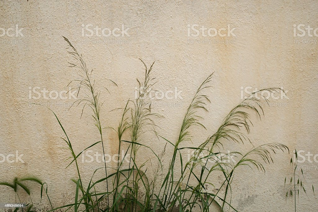 Wild Field Flowers and Grass on old White wall stock photo