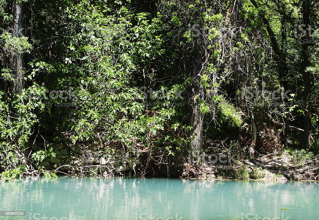 Wild Fig Tree by a lagoon stock photo