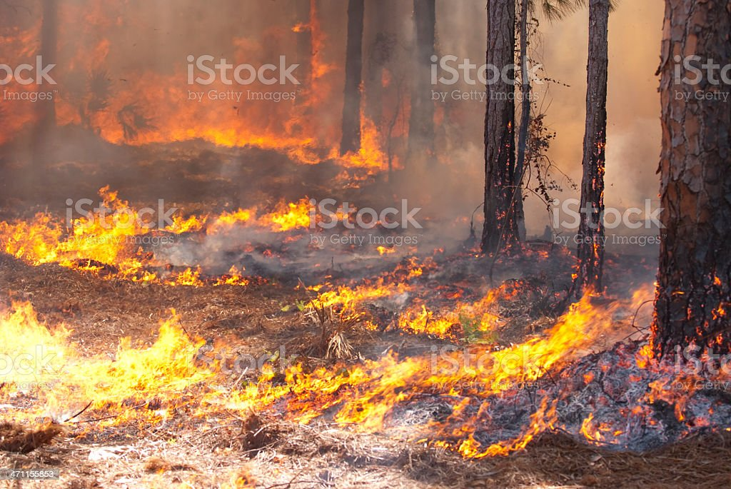 A wild fire spreading through a forest stock photo