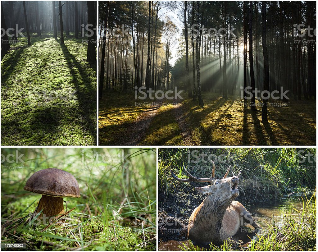 Wild flora and fauna in the forest royalty-free stock photo