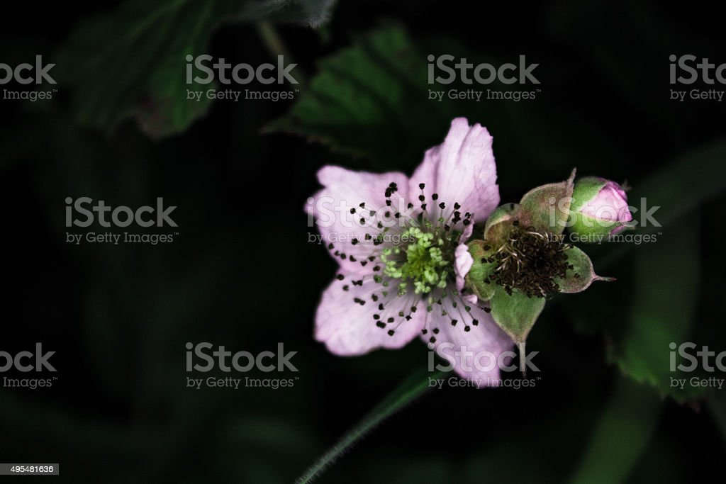 Wild flower close up royalty-free stock photo