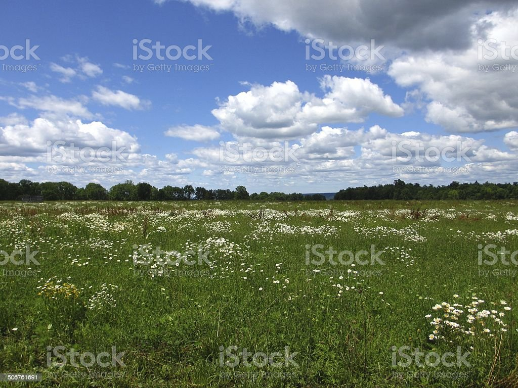 Wild Flower Field by the Lake stock photo