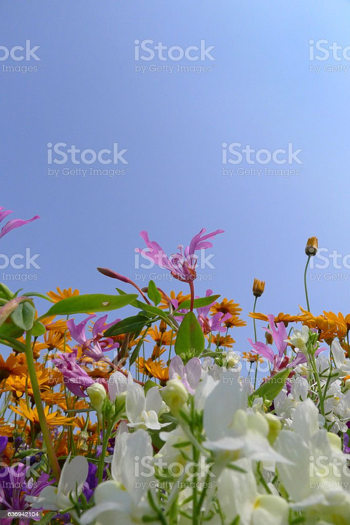 wild flower fields stock photo