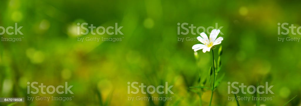 Wild flower growing in a forest stock photo
