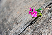 Wild flower growing out of concrete cracked