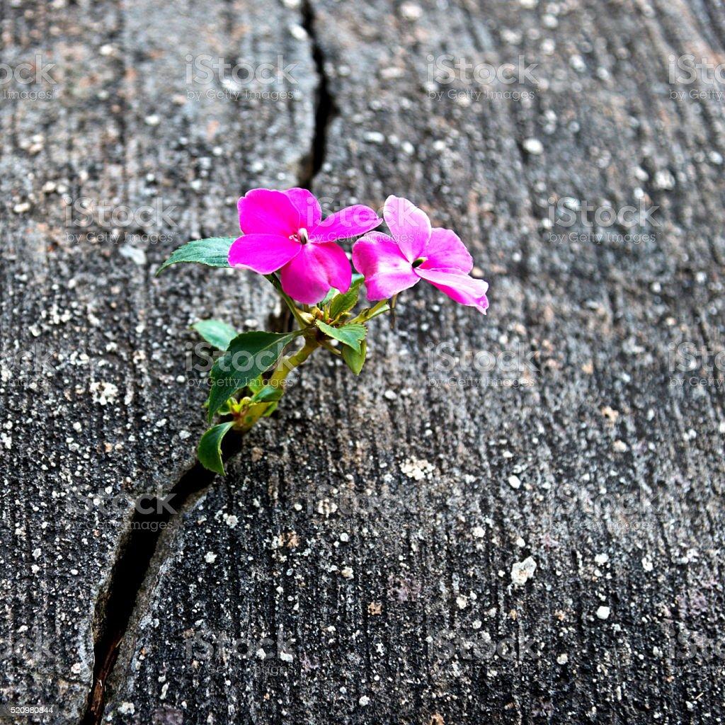 Цветок растущий