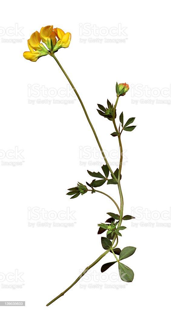 Dziki kwiat zbiór zdjęć royalty-free