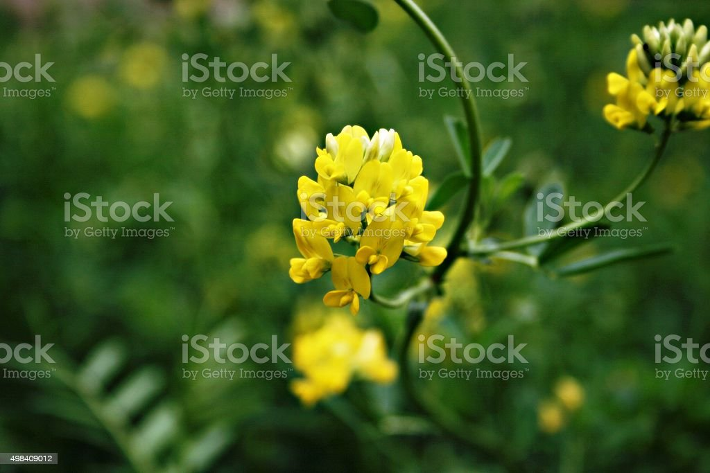 Wild flower stock photo