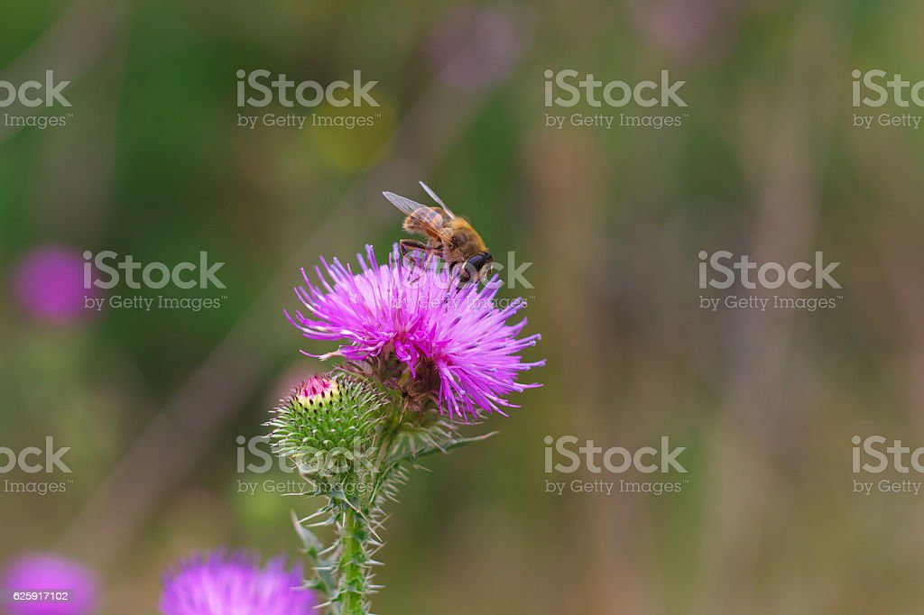 Wild flower with a fly stock photo